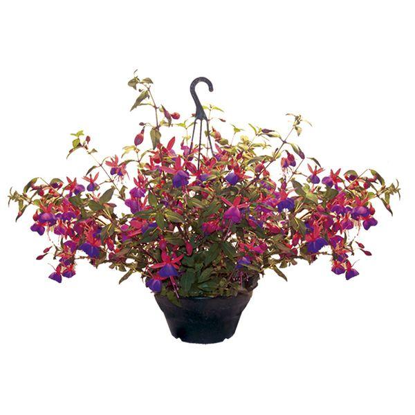Vaso Cuia 21 para Plantar - kit com 10 Cuias