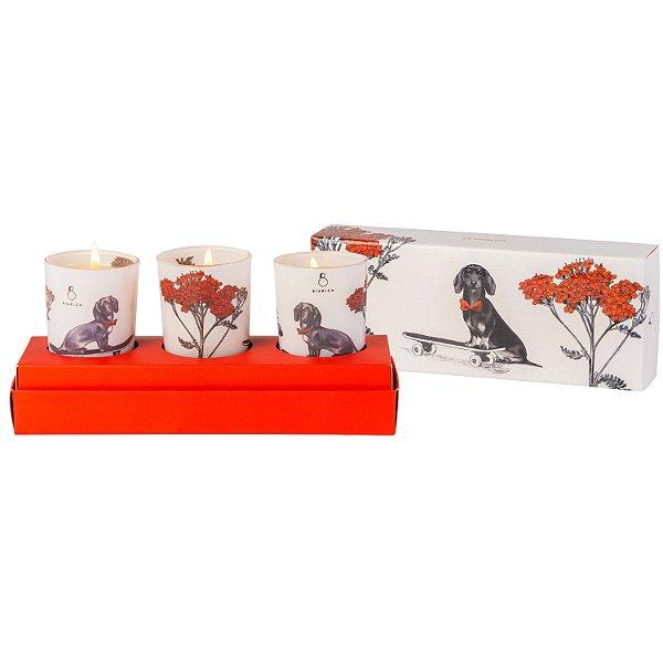 Velas perfumadas Hund Kit