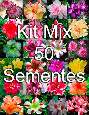 KIT MIX 50 sementes de Rosa do Deserto