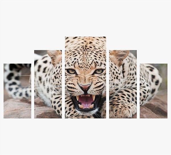Leopardo 5 peças - Color