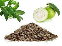 Folhas de Goiabeira Desidratada - 30g (Psidium Guajava)