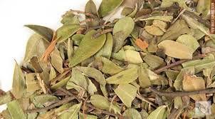 Chá Uva Ursi - 20g (Infecção Urinária) Arotostaphylos uva-ursi