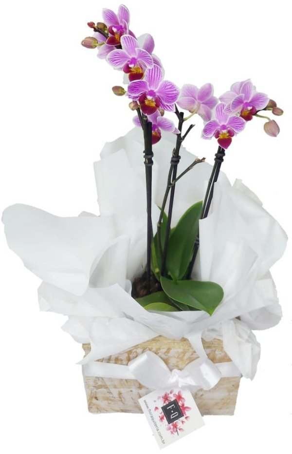 Mini Orquídea Wood