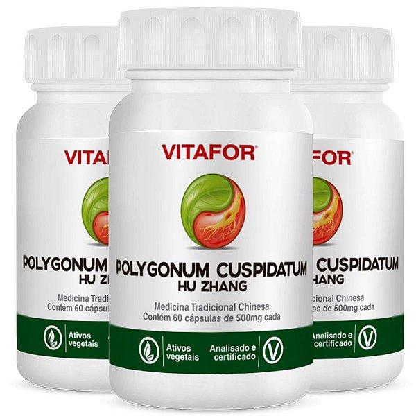 Kit 3 Polygonum Cuspid 500mg 60 Cápsulas MTC Vitafor