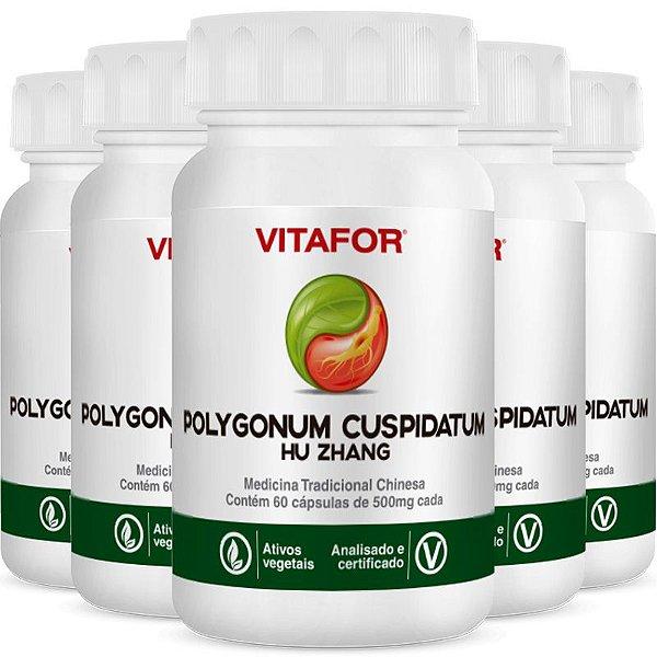 Kit 5 Polygonum Cuspid 500mg 60 Cápsulas MTC Vitafor