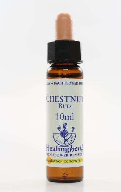 Floral de Bach Chestnut Bud - Essência Estoque 10mL