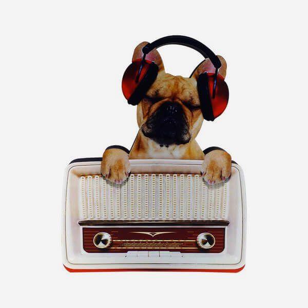 Placa Decorativa Radio Dog
