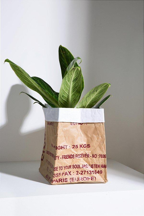 paper bag G