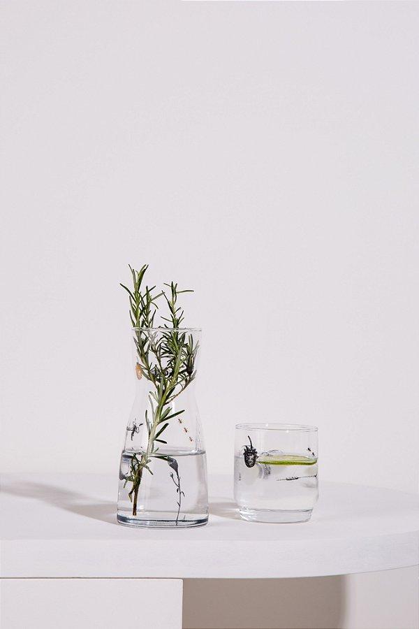 moringa botânica