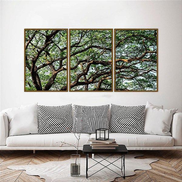 Conjunto com 03 quadros decorativos Galhos Árvore 50x70cm (LxA) Moldura Amadeirada