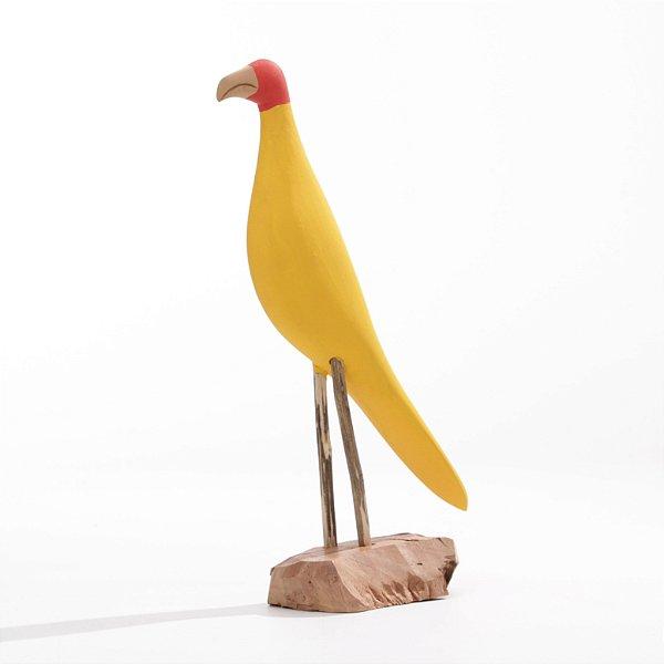 Arara Amarela 01
