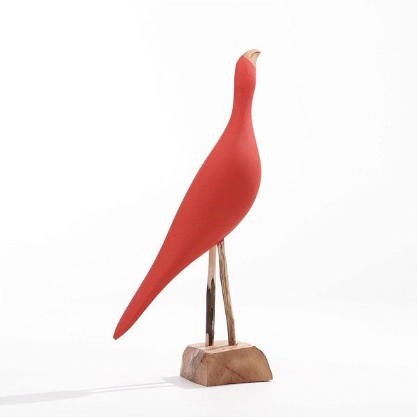 Arara Vermelha 01