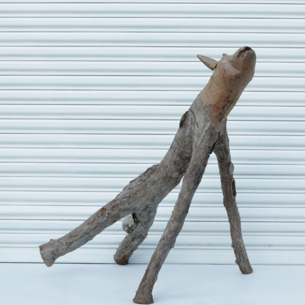 Lobo da Caatinga