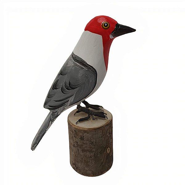 Pássaro na base P - Jair Prados - MG