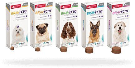 Bravecto Comprimido Para Cães