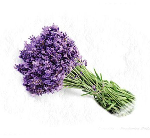 30 Sementes Importadas De Alfazema Lavanda Francesa Flor