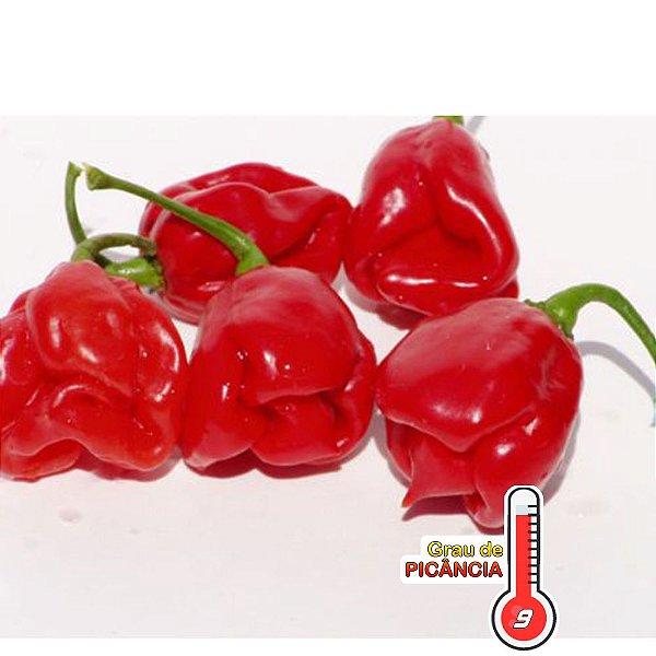 100 Sementes de Pimenta Jamaican Red
