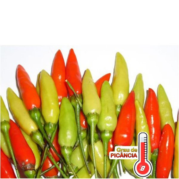 120 Sementes Pimenta Tabasco Capsicum Frutescens