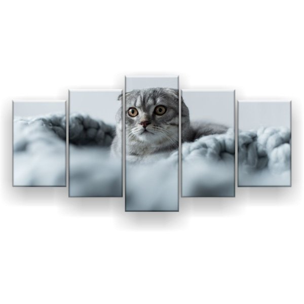 Quadro Decorativo Gato Scottish Fold 129x61 5pc Sala