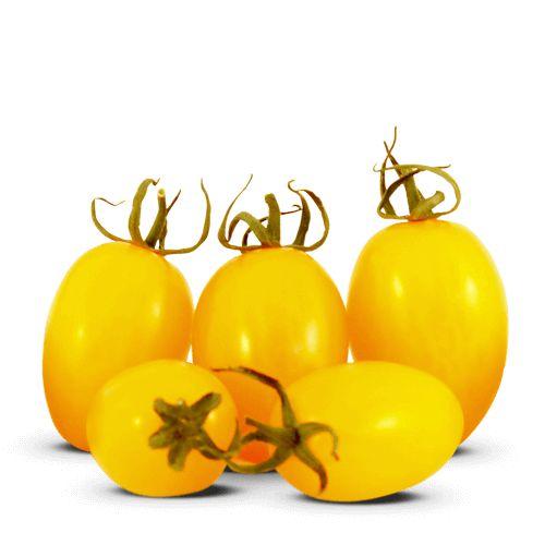 Iraí - Grape Amarelo (12 sementes / 0,02g)