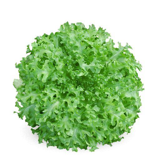 BS AM0074 (125 sementes / 5g)