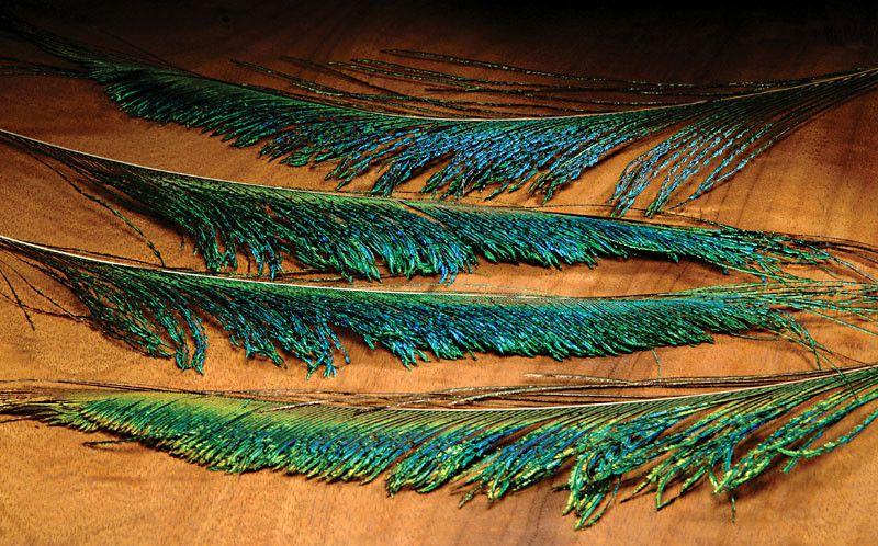 PEACOCK SWORDS  WAPSI