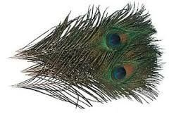 PEACOCK EYES WAPSI