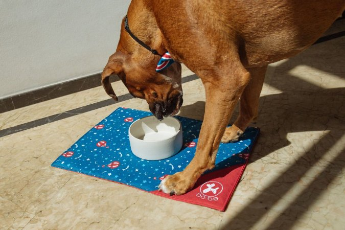 Comedouro para Cachorros   Cerâmica Branca