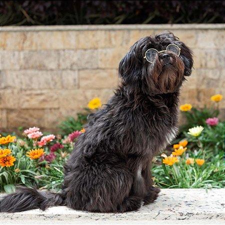 Óculos Transpartente para Cachorros | Médio e Grande Porte
