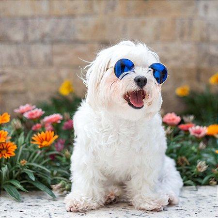 Óculos de Sol para Cachorros de Médio e Grande Portes Colors