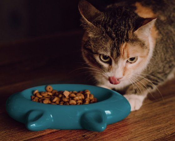 Comedouro para Gatos | Cerâmica Cat Turquesa