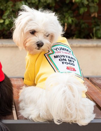 Camiseta para Cachorros e Gatos | Mustard