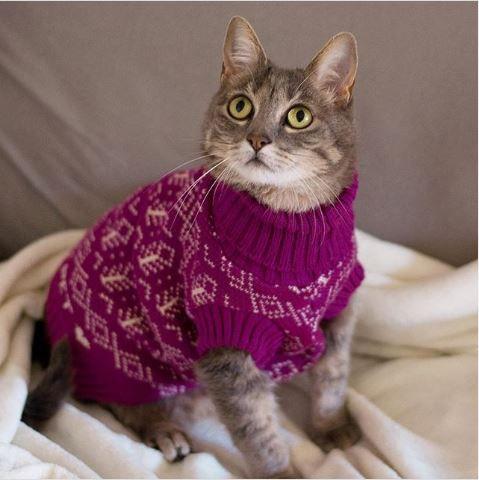 Tricot para Cachorros e Gatos   Açaí