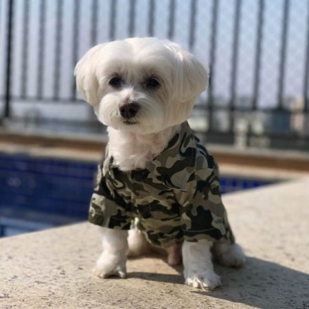 Camisa para Cachorros | Camuflado