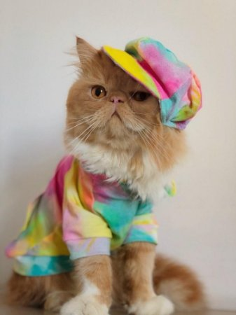 Camiseta Pet Tie Dye Amarela