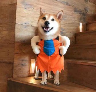 Fantasia para Cachorros Homem da Caverna