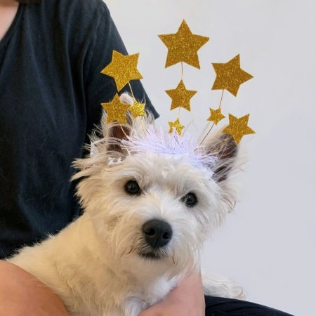 Fantasia Réveillon para Cachorros e Gatos Estrelas Douradas