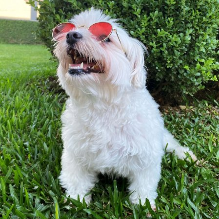 Óculos de Sol Round Colors para Cachorros