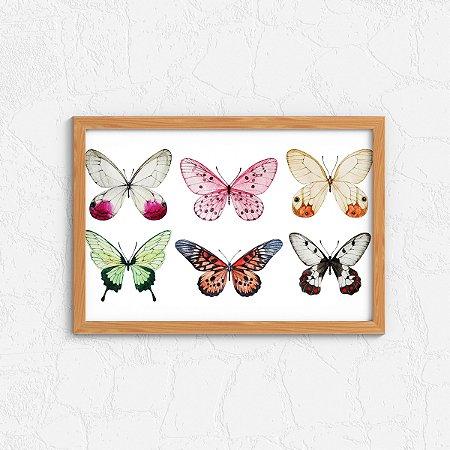 Quadro Decorativo Animais- Kinds of Butterflies.