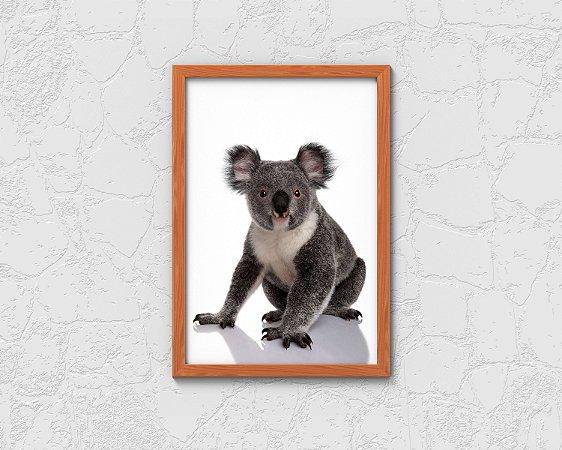 Quadro Decorativo Animais- Australian Koala.