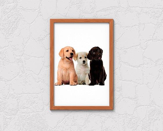Quadro Decorativo Animais- Puppies.