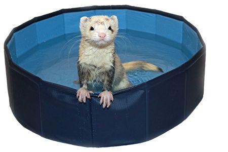 Ferret Swimming Pool Marshall
