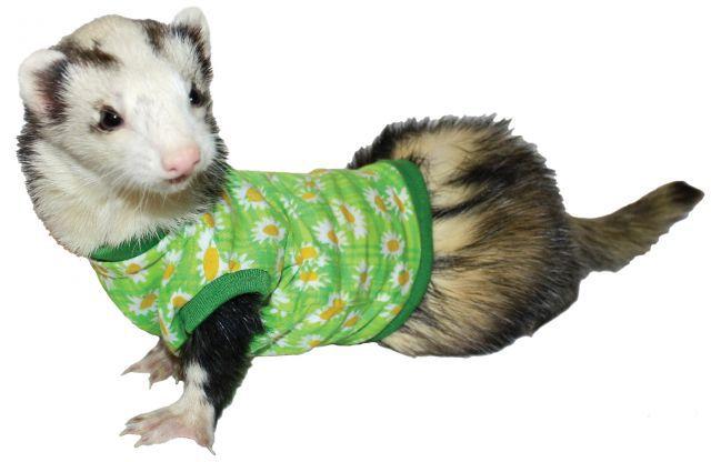 Camiseta Marshall para Ferrets