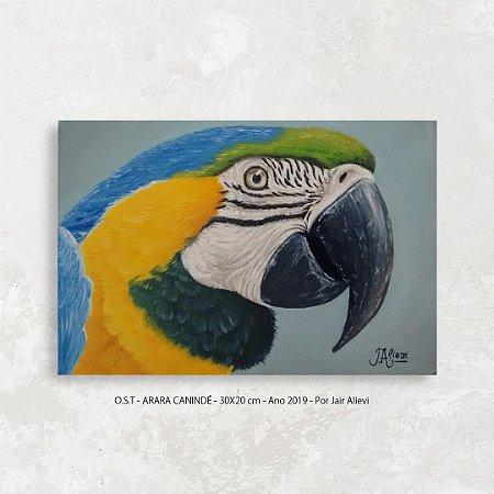 Quadro pintura Arara Canindé - Tinta Óleo Sobre Tela 30x20cm