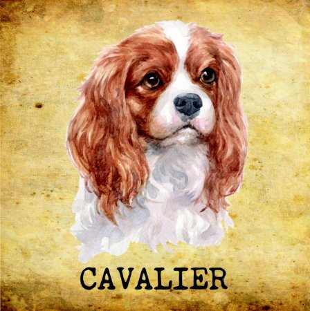 Placas de Cavalier King Charles Spaniel