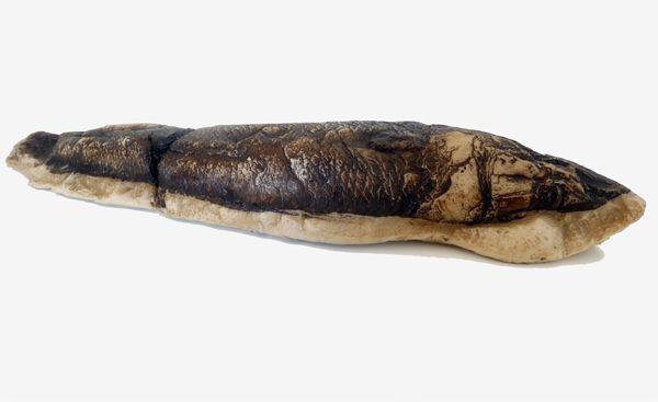 Fóssil de peixe (réplica em tamanho real)