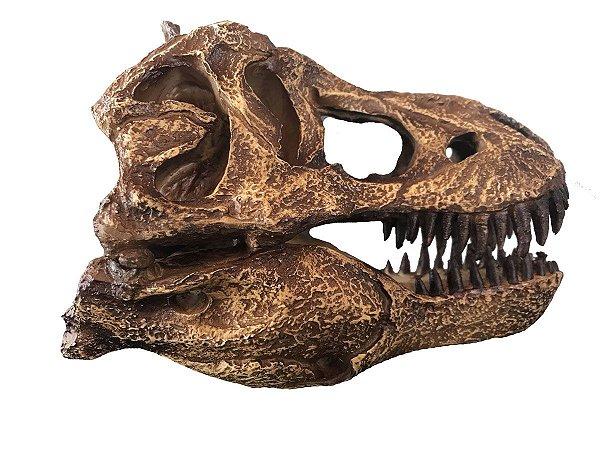 Crânio de Tyrannosaurus (escala reduzida 1:10)