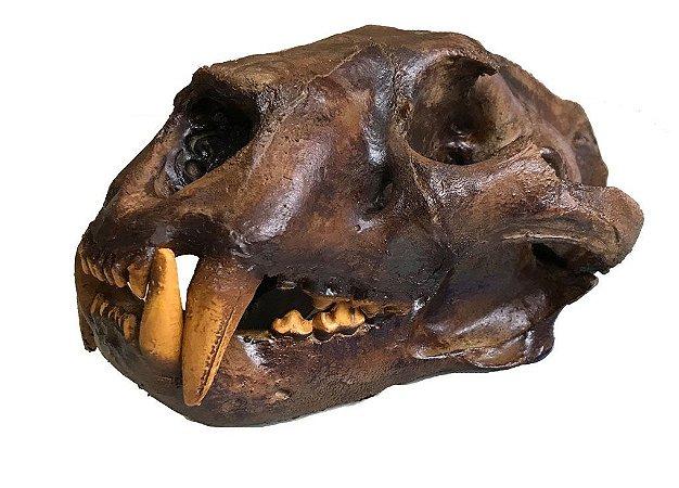 Crânio de Leão modelo 2
