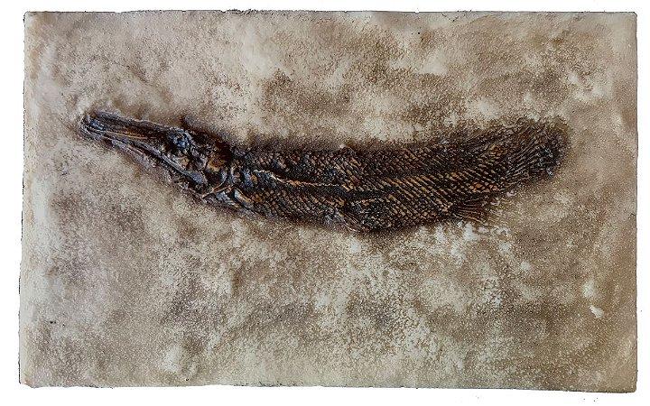 Fóssil de peixe (Lepisosteus strausi)