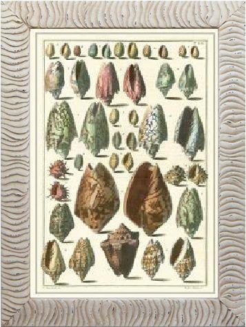 Quadro coleção conchas